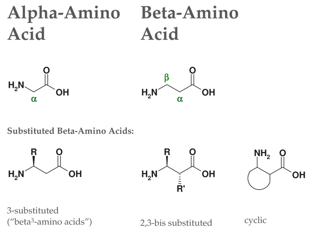 beta amino acids structure